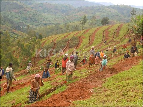 Locals have been hired to work on terracing project under VUP's Public works