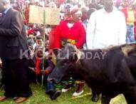 Rwandans Might Walk Cows Into Parliament
