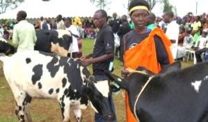 Diaspora Initiative to Offer Free Cattle to Poor Rwandans