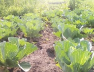 New Technology to Give Farmers Timely Weather Forecast