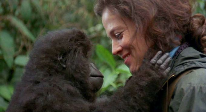 Dian Fossey – Life and Death Essay Sample