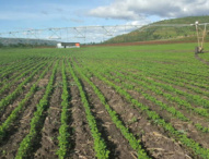 Rwanda Backs India-African Development Bank New Venture to Fund Agriculture