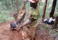A day in The Life of Rwandan Hunters