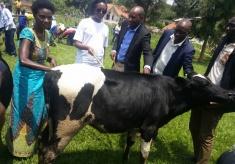 Genocide Survivor Gets a Cow, Calls Her a 'Neighbor'