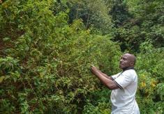 Promoting Herbalists: Kigali Creates a Healing Garden