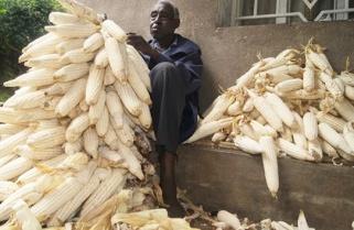 Rwanda Desperately Needs Cereals And Grains