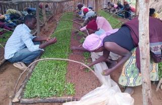 Canadian Stevia Company May Have Conned Rwandan Farmers