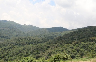 New In Rwanda: Gishwati National Park For 2020