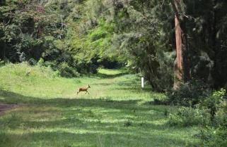 Rwanda Selects Ruhande Arboretum for Queen Elizabeth Canopy