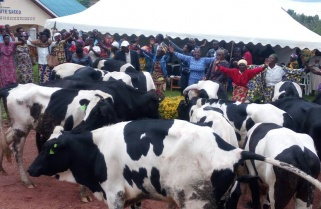 Rwanda Declares Quarantine as Deadly Rift Valley Fever Claims 99 Cattle
