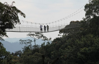 Canopy Walkway in Rwanda's Nyungwe Park Temporarily Closed