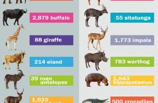 Rhinos' New Homemates in Akagera Park