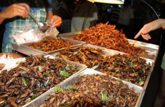 Prepare to Eat Insects, Worms -Experts Advise