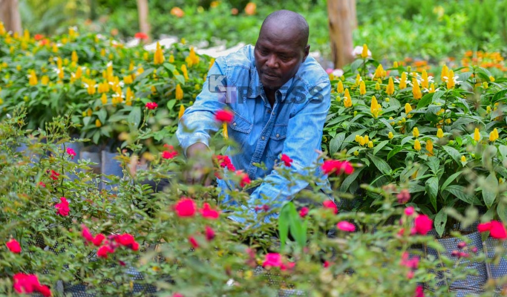 Meet the Men Turning Kigali Green