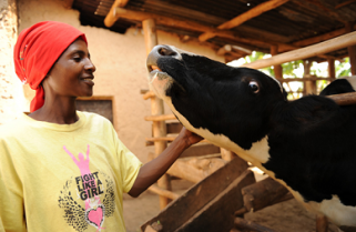 Rwandans in France Donate to One-cow-per Family