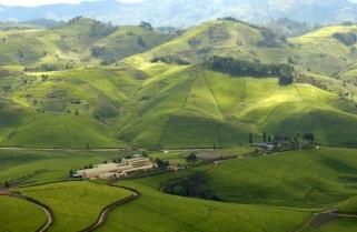 Rwanda Unveils New Factory to Boost $209M Tea Exports Target