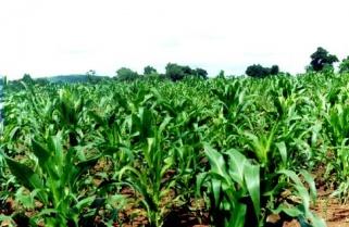 Rwanda Experiencing Poor Crop Harvests, Farmers Abandoned