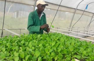 Rwandan Farmers to Acquire Fertilizers in a Click