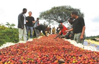 Rwanda to Award the Best Coffee Next Week