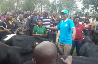 When you Go for Umuganda and Return Home with Cows