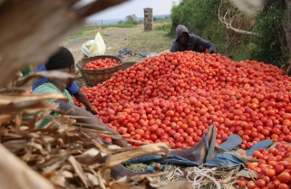 IMF Predicts Healthy Economic Growth for Rwanda