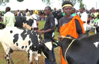 Diaspora Initiative to Offer Free Cattle to Poor Rwandans
