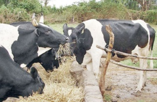 UPDATED: Suspected Foot and Mouth Disease Reported in Eastern Province