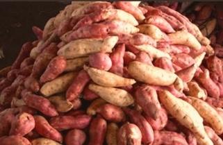 Scientists to Add Nutrients in Rwandan Sweet Potatoes
