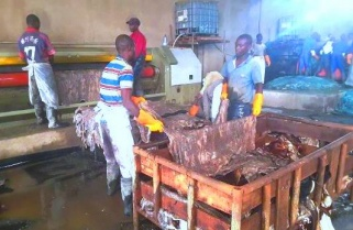 Chinese Leather Factory Dumping Waste in Nyabarongo River