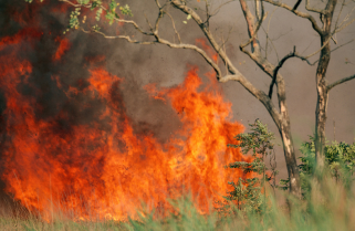 Police and Residents Battle Fire in Nyungwe Forest