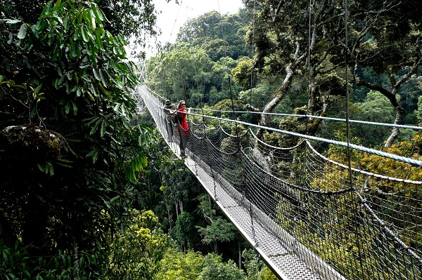 Canopy Walk in Rwanda's Nyungwe Forest. The country received 1.2 million visitors last year