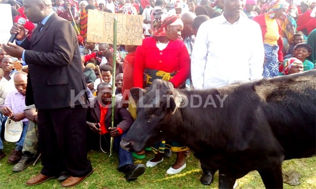 A resident of Ngoma district brought her cow to a consultative meeting with legislators.
