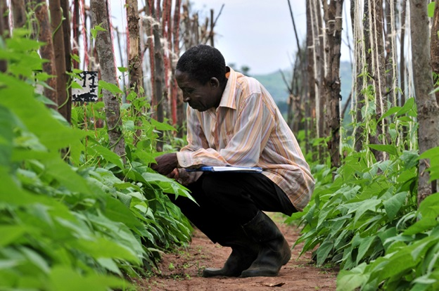 A farmer records data obtained from his beans farm in Nyagatare district, eastern Rwanda