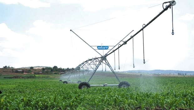 A maize crop garden under mechanized irrigation in Eastern Province. The government of Rwanda wants the private sector to takeover irrigation systems.