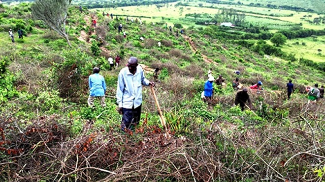 Nyagatare district residents planting trees on a hill
