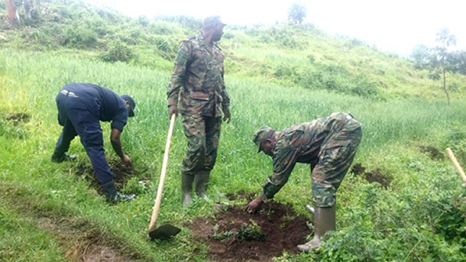 Officers of Rwanda Police and Rwanda Defence Forces plant trees during Umuganda a monthly community exercise