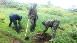 Rwandans Plant 30 million Trees To Save Environment