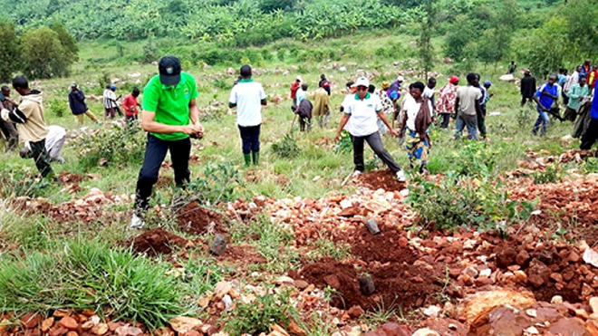 Residents of Gisagara district also plant trees on a rocky hill