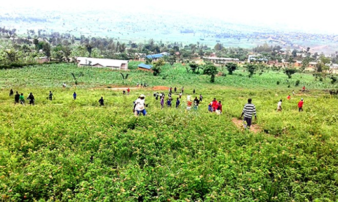 Rwandans planting trees. The country aims at rehabilitating forests on 1,010 hectares of public land.