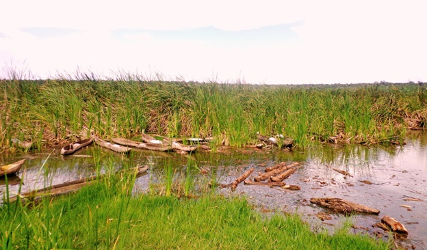 Lake Cyohoha infested with shrubs