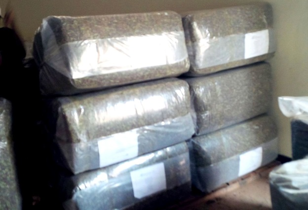 Dry Stevia leaves are compressed and packaged for export