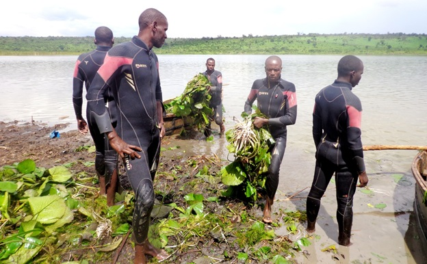Some lakes have been cleared of water weeds. The Divers earn from cleaning the lakes
