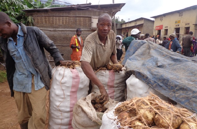 Irish potatoes are Rwanda's common food crop rich in proteins. Irish production has increased in the past years after research to improve various varieties