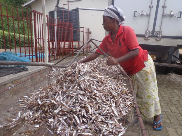Women dry sardine from Lake Kivu as they prepare to export to DRC