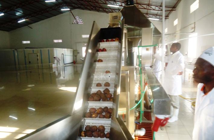 Nyabihu Potato factory processes several products