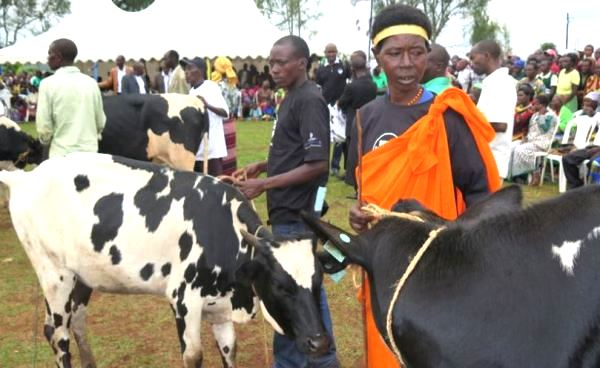 Beneficiaries of one-cow-per family initiative
