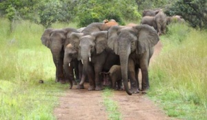Akagera National Park Revises Visiting Prices for 2021