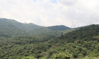 IUCN Global Environment Series to Discuss Reforestation of 150M Ha