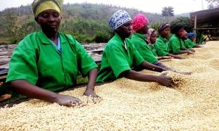 Rwanda Reviews Coffee Prices