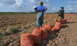 New Survey Exposes Loopholes in Farmers' Access to Inputs